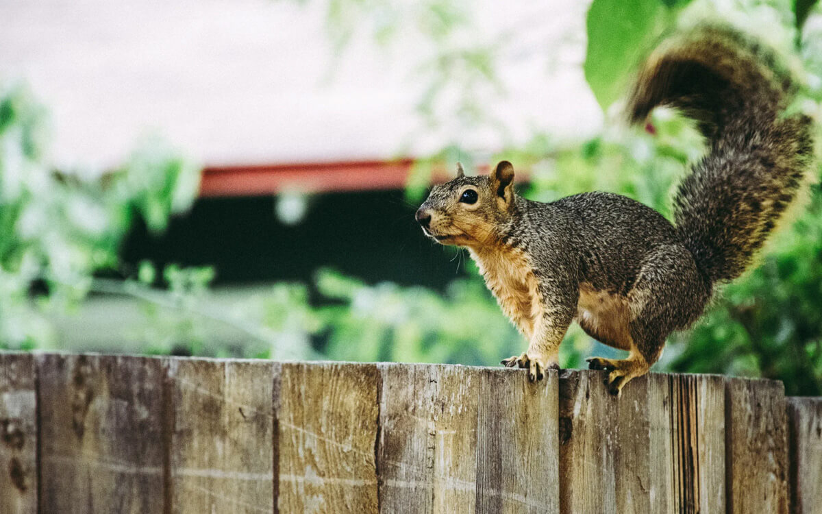 10 Ways to Protect Your Roof from Critters and Animal Roof Damage - San Antonio, TX