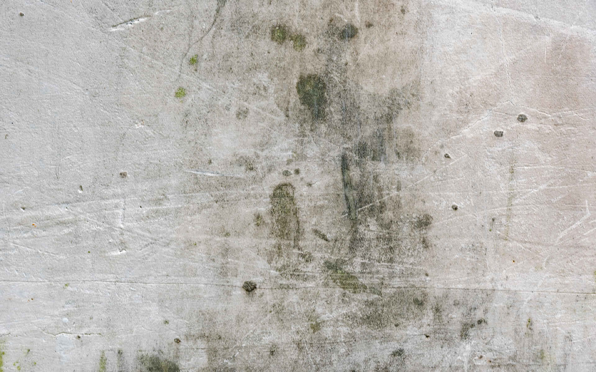 Mold vs Mildew - What's the difference and what should you do - San Antonio Roofing